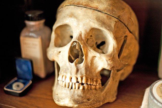 Skull-3.jpg