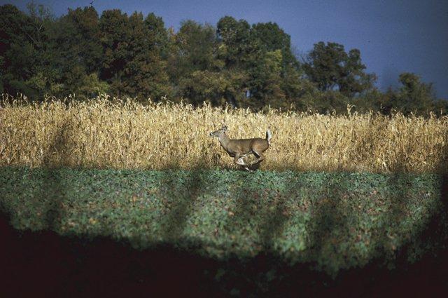 WI-0057-Deer-FW.jpg
