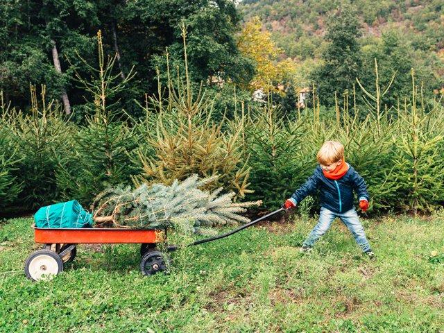 tree-farms.jpg