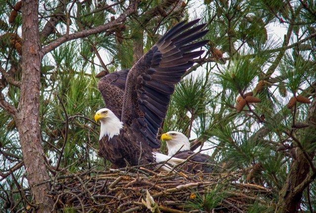 parents-in-nest-gilbertsville-kentucky.jpg