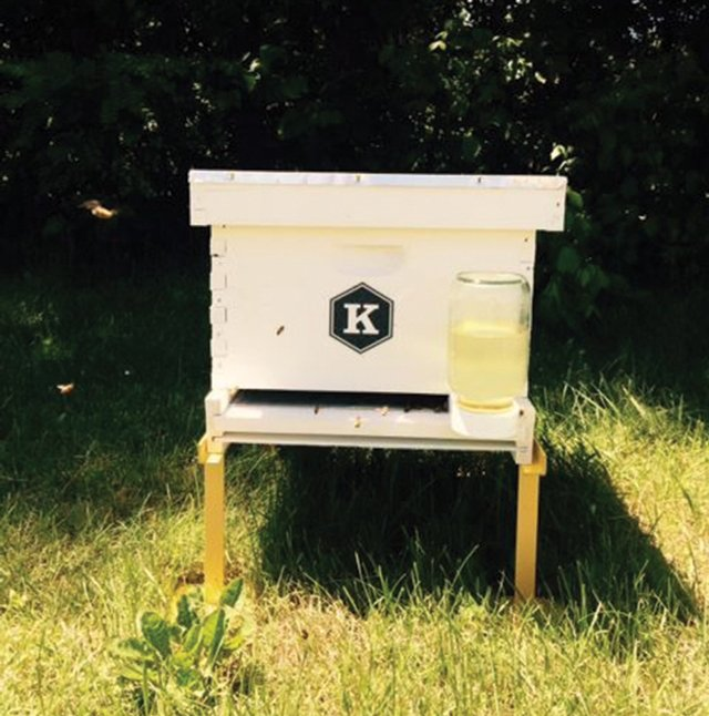 Busy as Bees - kentuckymonthly com
