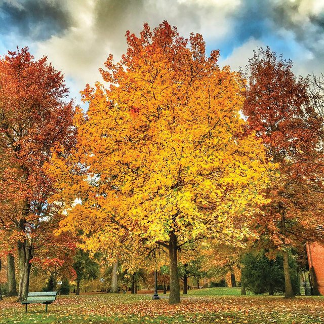 Fall-in-Central-Park'-15.jpg