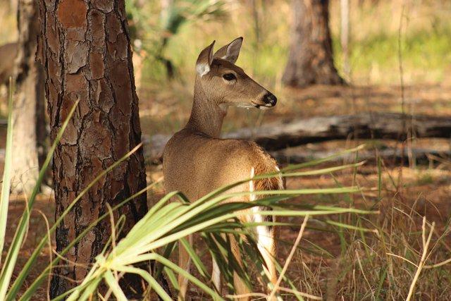 deer-1231344_1920.jpg