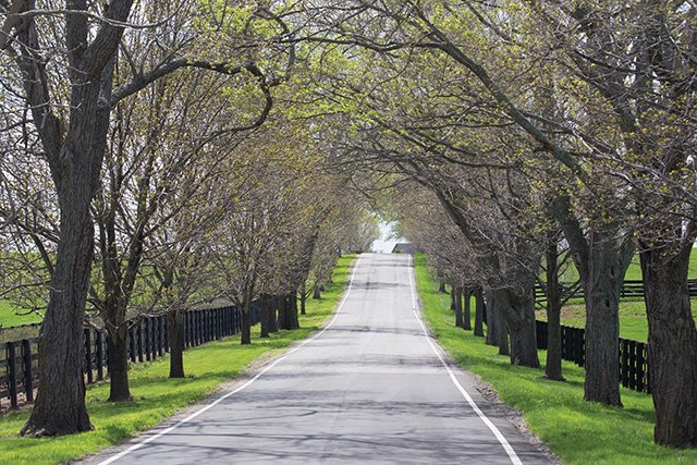 Old Frankfort Pike in Spring 05-GBurch.jpg