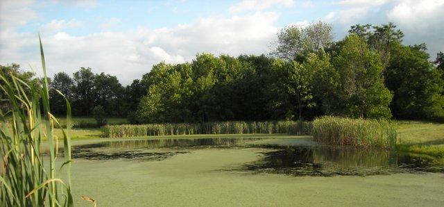 Stoney Point Pond in Summer.jpg
