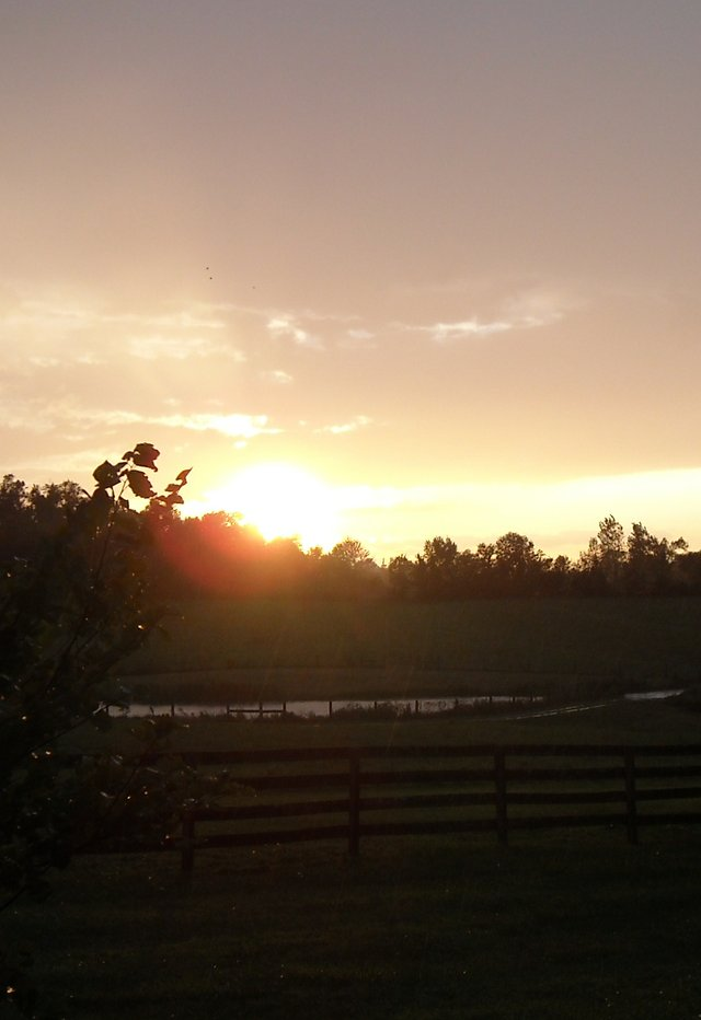 The Pond at Sunset.jpg
