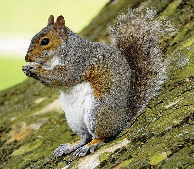 fieldnotes-squirrel.jpg