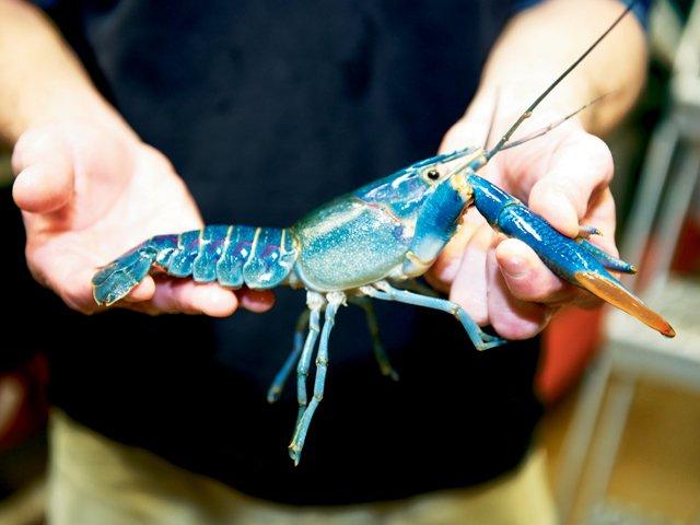 KSU-Aquaculture_06.jpg