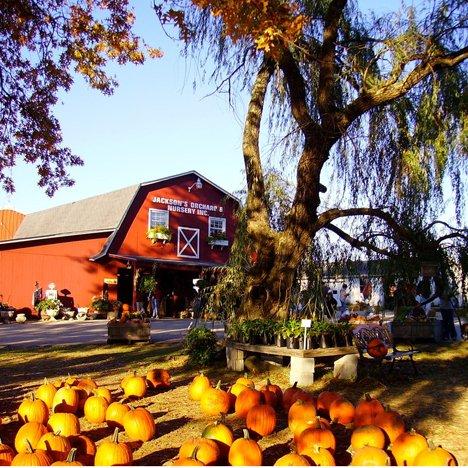 pumpkinfest.jpg