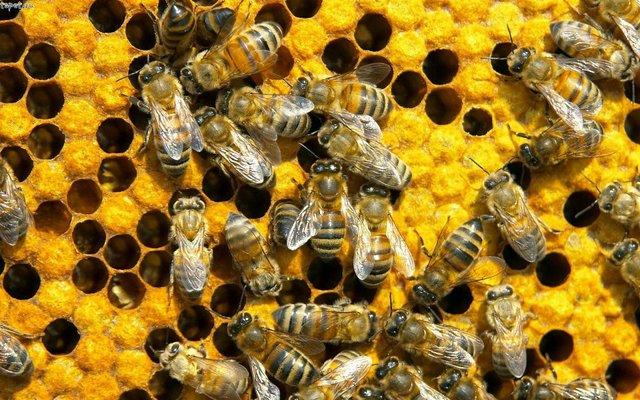 Save Honey Bee 523372_517894438220757_1514382294_n.jpg