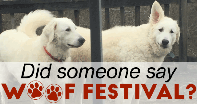 woof-festival-fb-cover.png